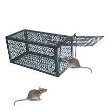 Guide d'achat: Les pièges à rats