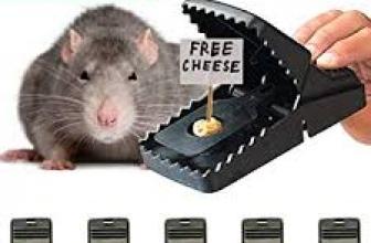 Comment se débarrasser des souris?